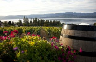 Summerhill winery - CTC_result