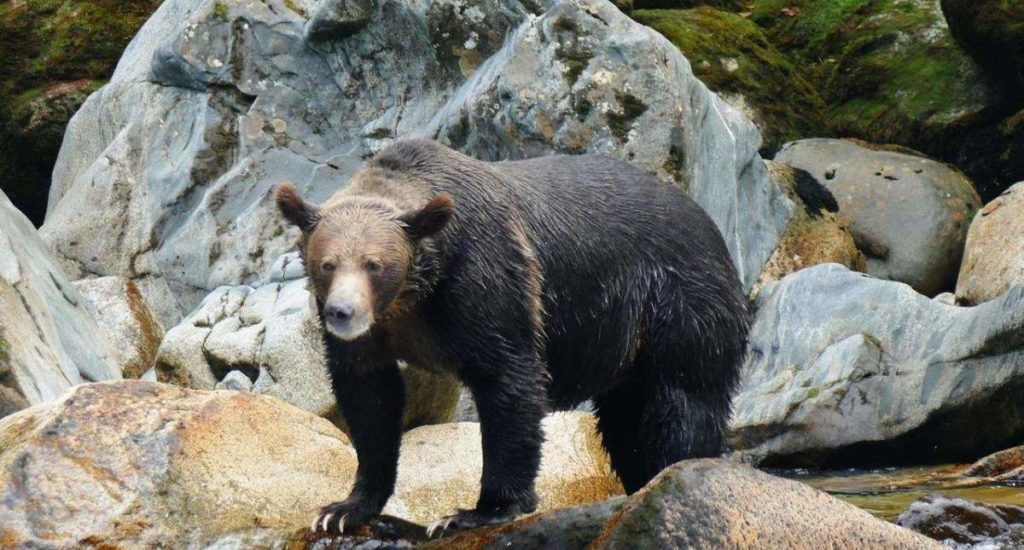 grizzlybear_andy_seawolfadventures_mike_result