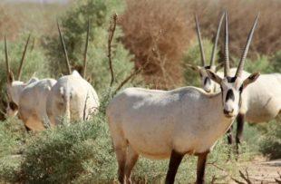 Shaumari wildlife reserve animals