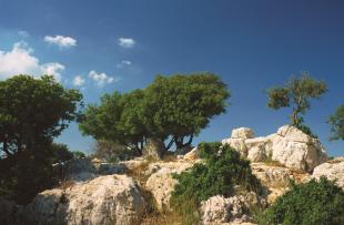 ajloun-trail-visit-jordan
