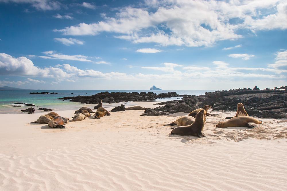 Galapagos luxury cruise