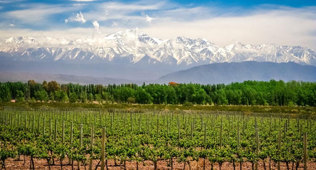 Mendoza wine region - your trip to argentina