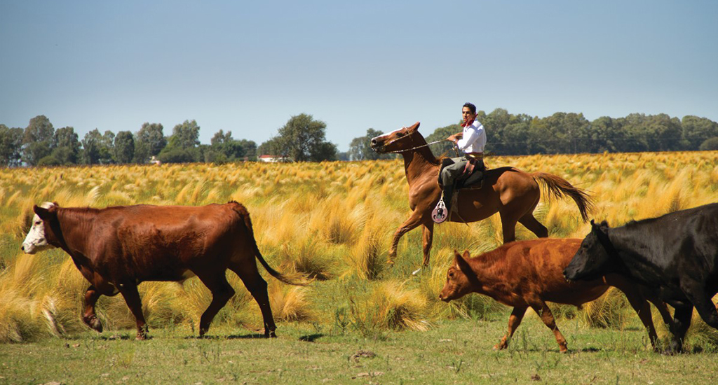 Pampas Estancia - Cattle Ranching Pampas - things to do in Argentina