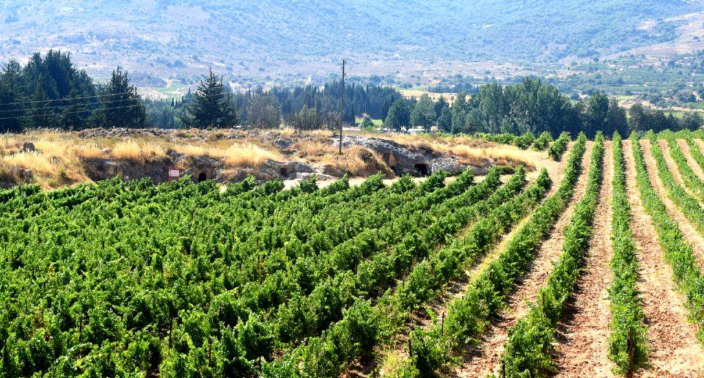 Kefraya winery lebanon
