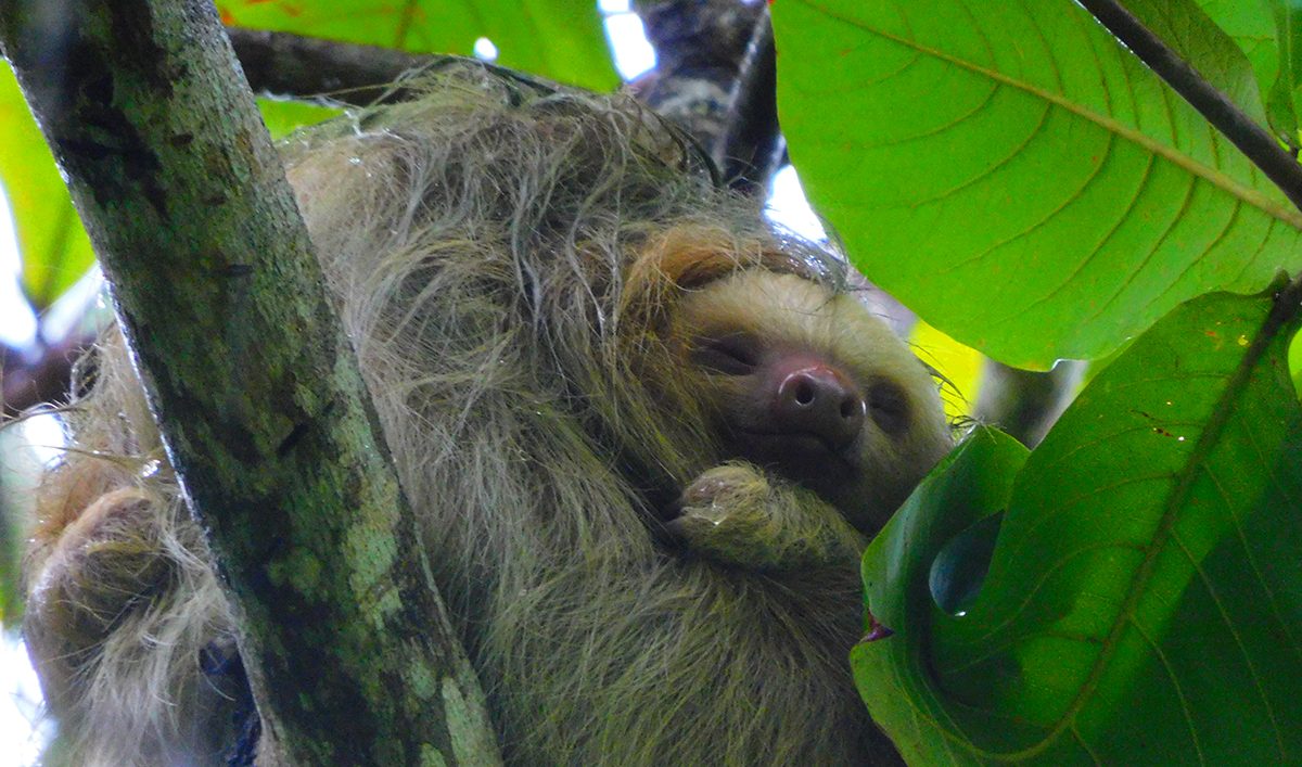 Costa Rica Sloth tour in Arenal
