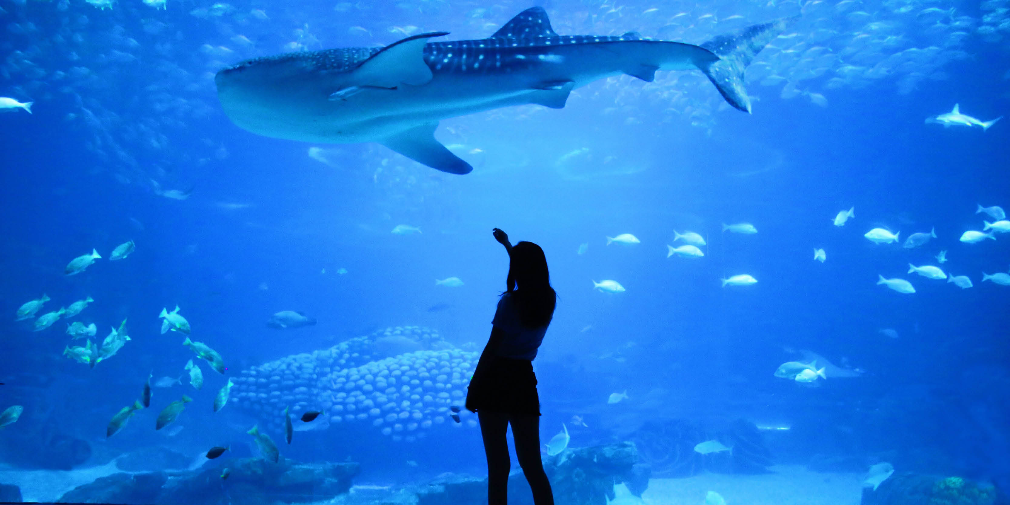 Dubai aquarium - Last-minute holiday Dubai