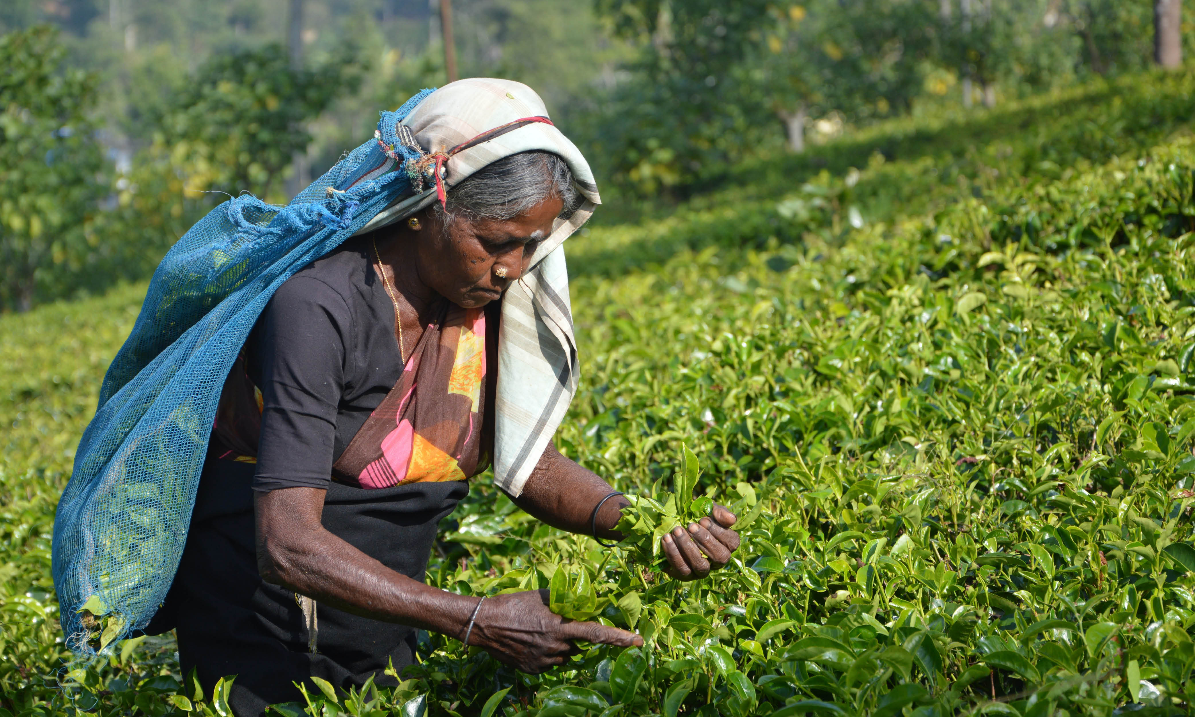 Explore Sri Lanka's Hidden Gems
