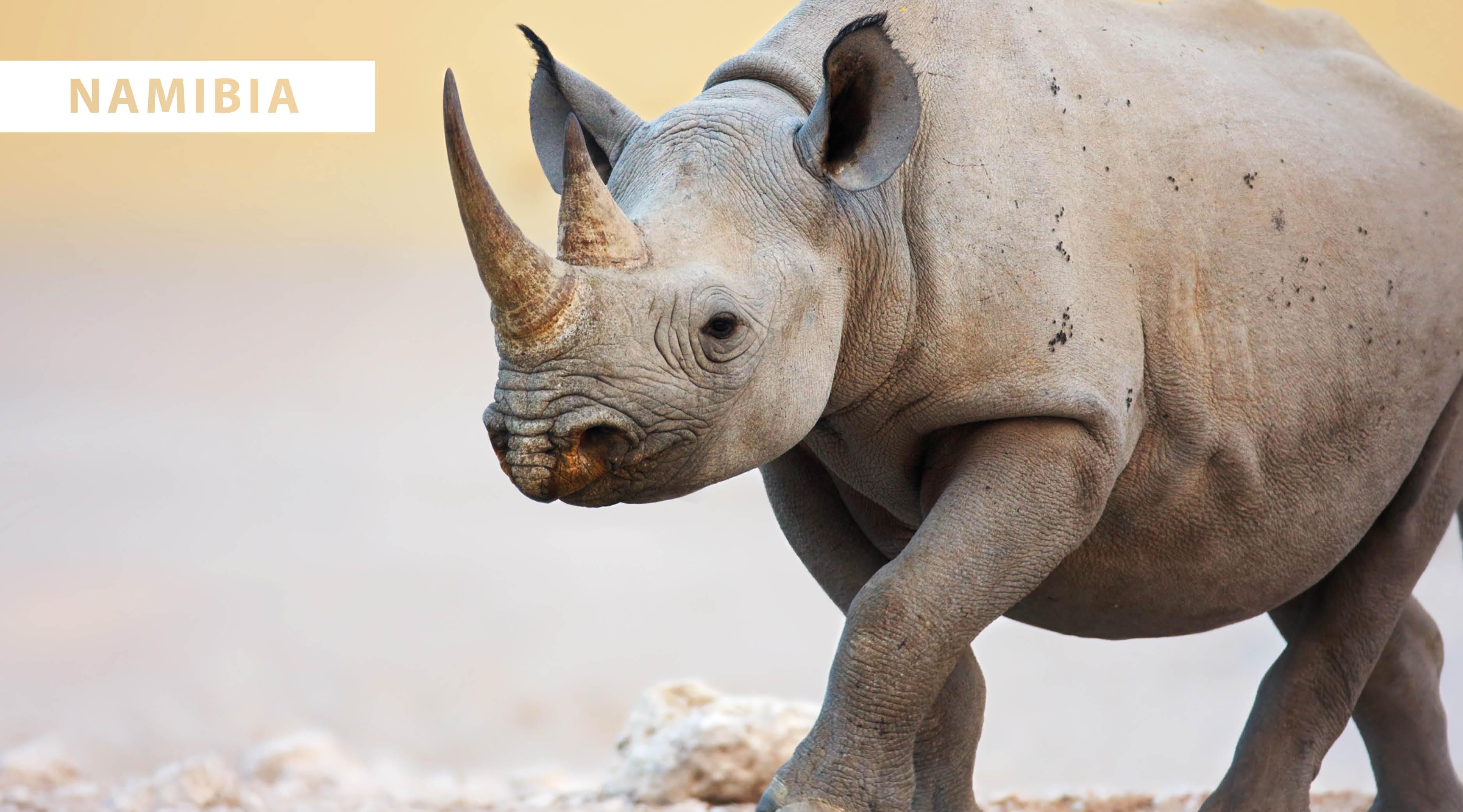 World Wildlife Day 2021 - blog