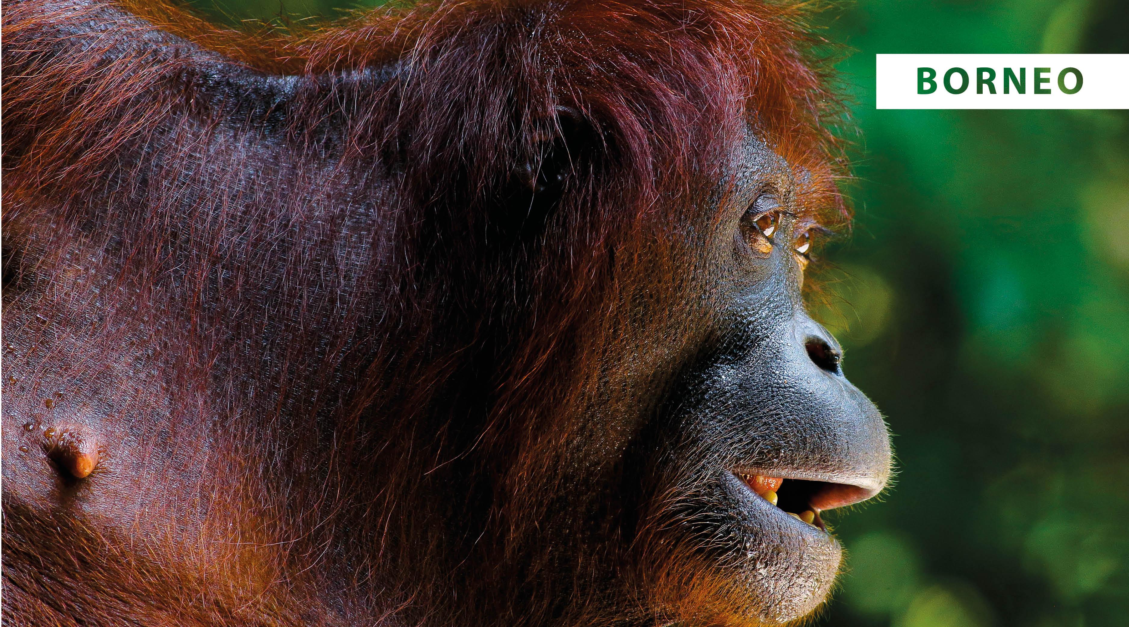 World Wildlife Day 2021 -Holiday Architects
