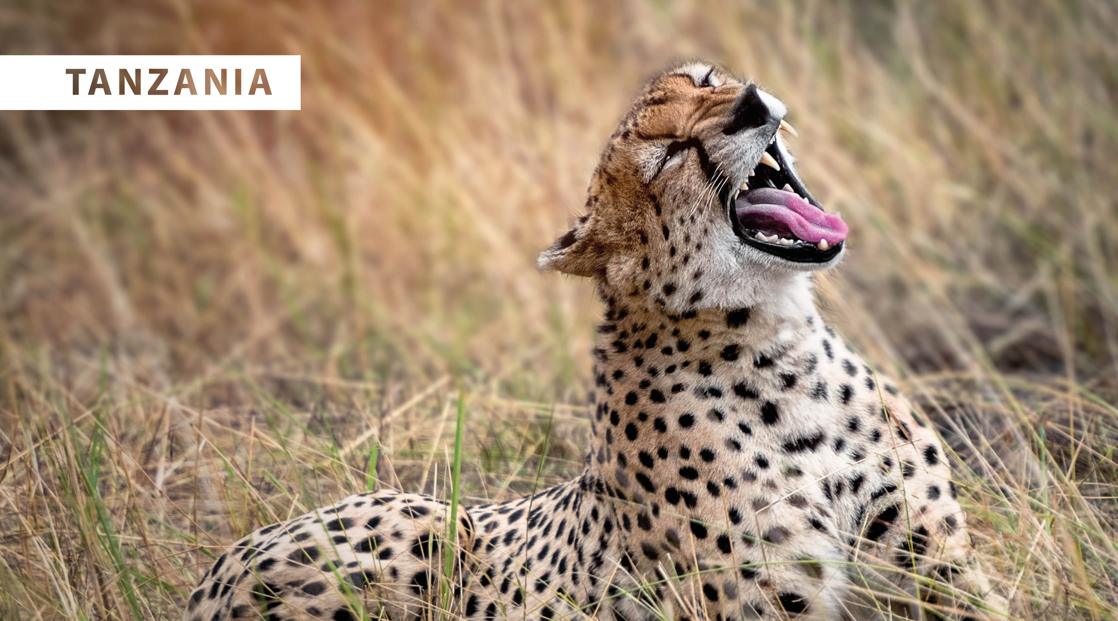 World Wildlife Day 2021 - blog4