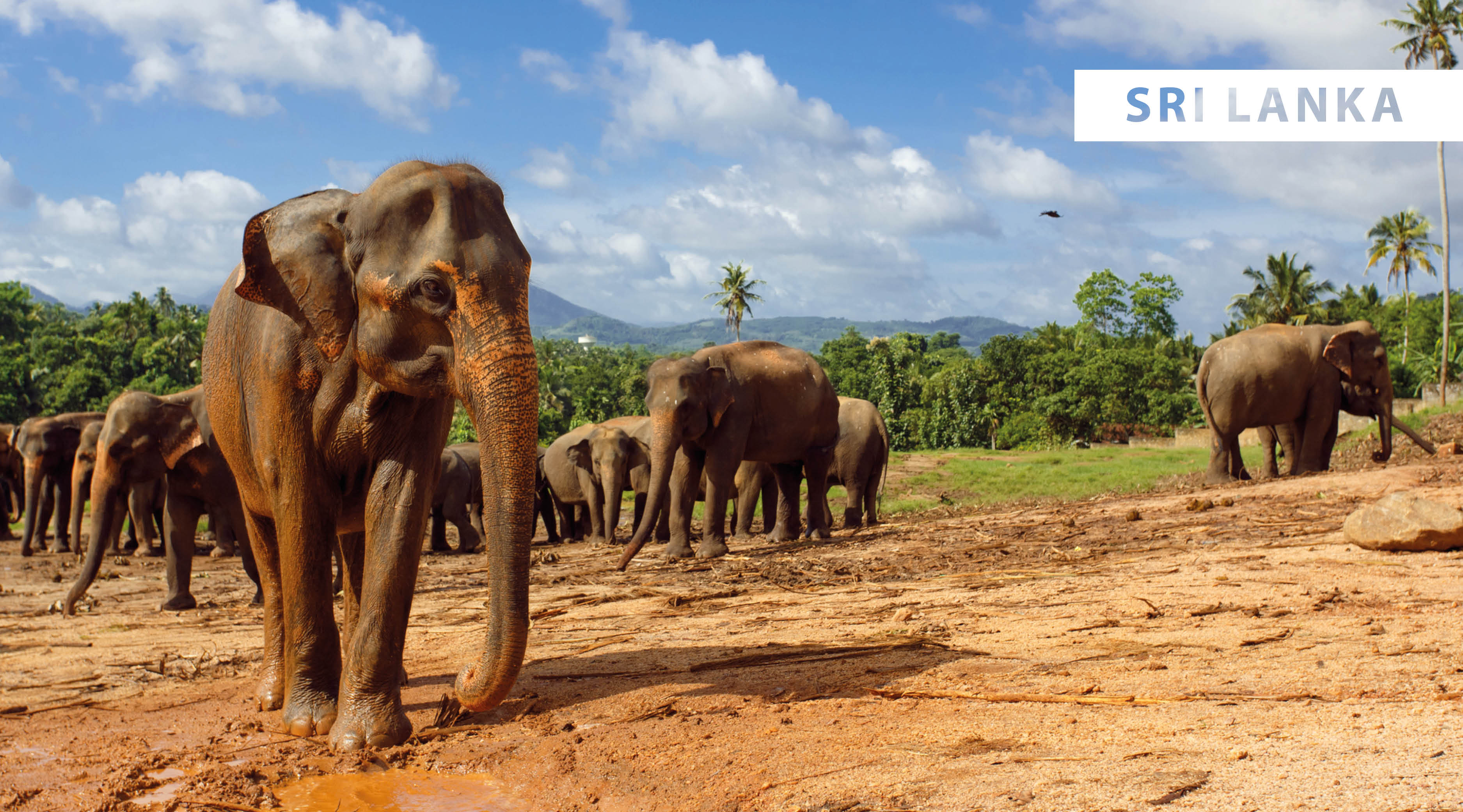 World Wildlife Day 2021 - blog5