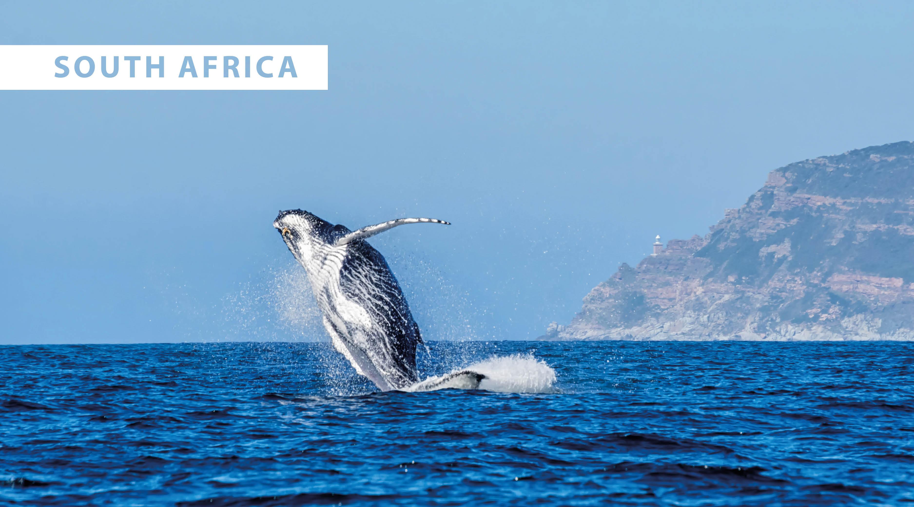 World Wildlife Day 2021 - blog7