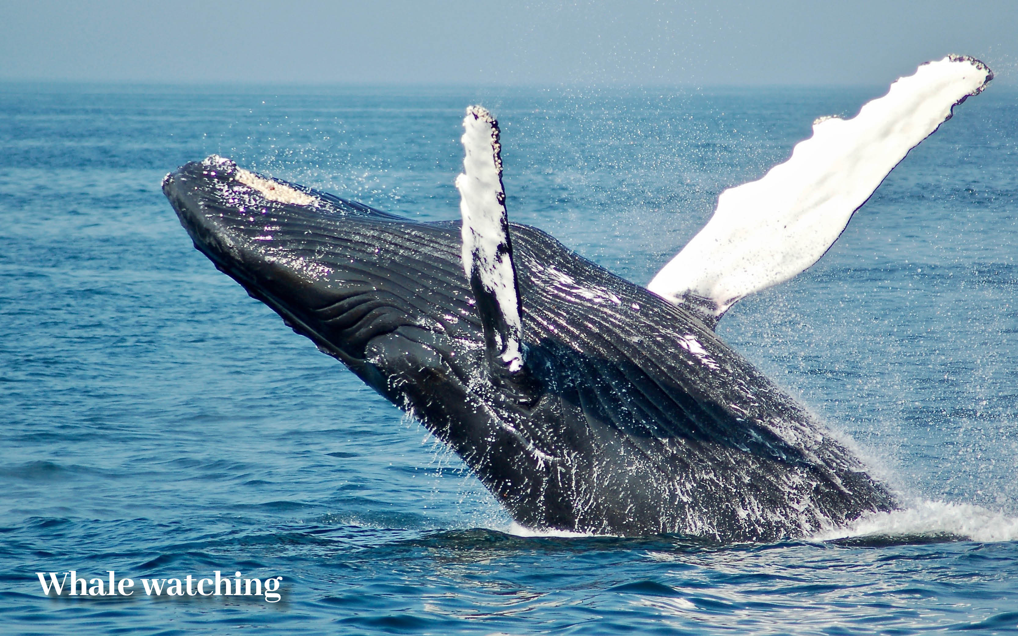 Costa Rica holiday offer Whale watching