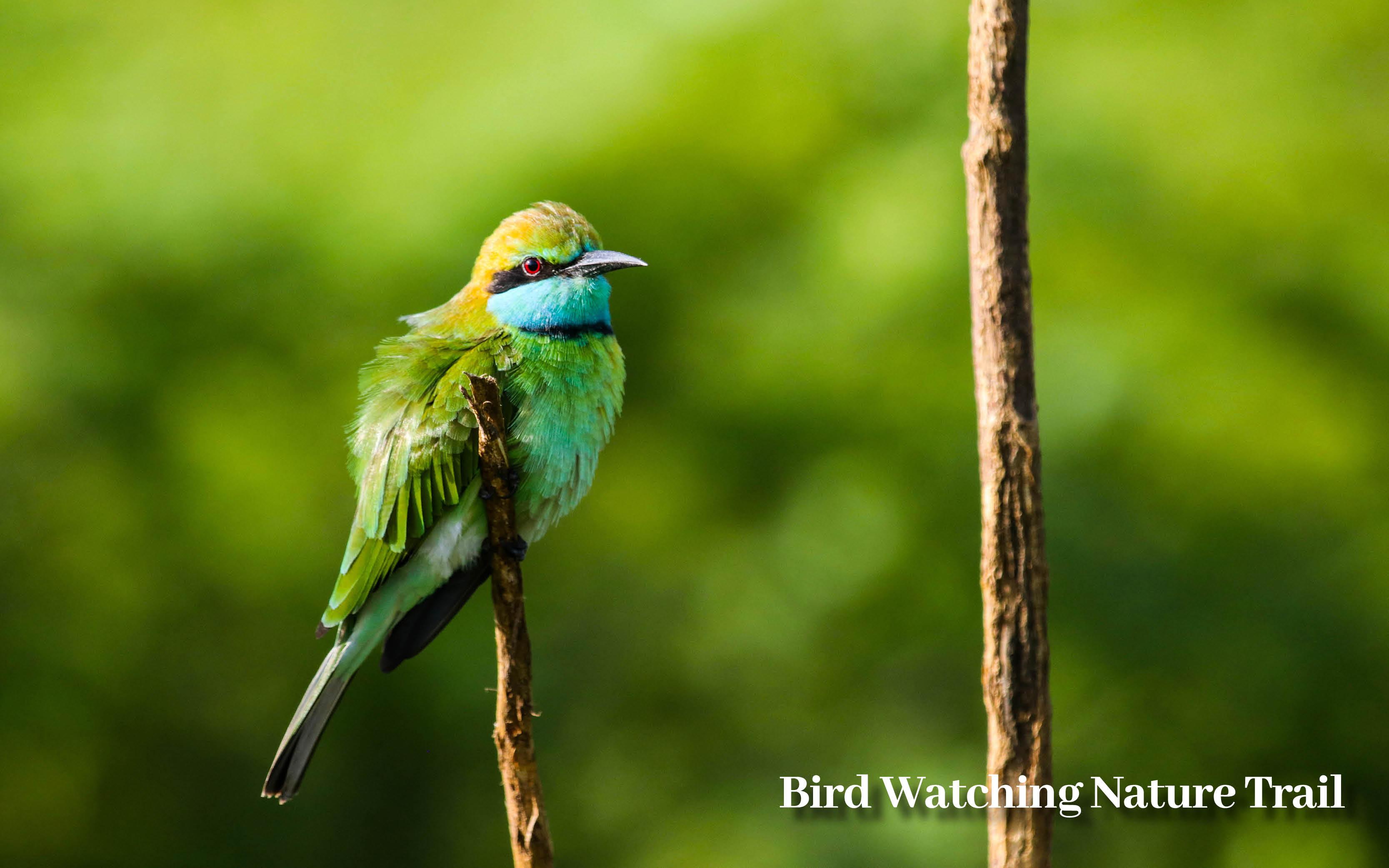 Sri Lanka bird watching Sri Lanka holiday offer