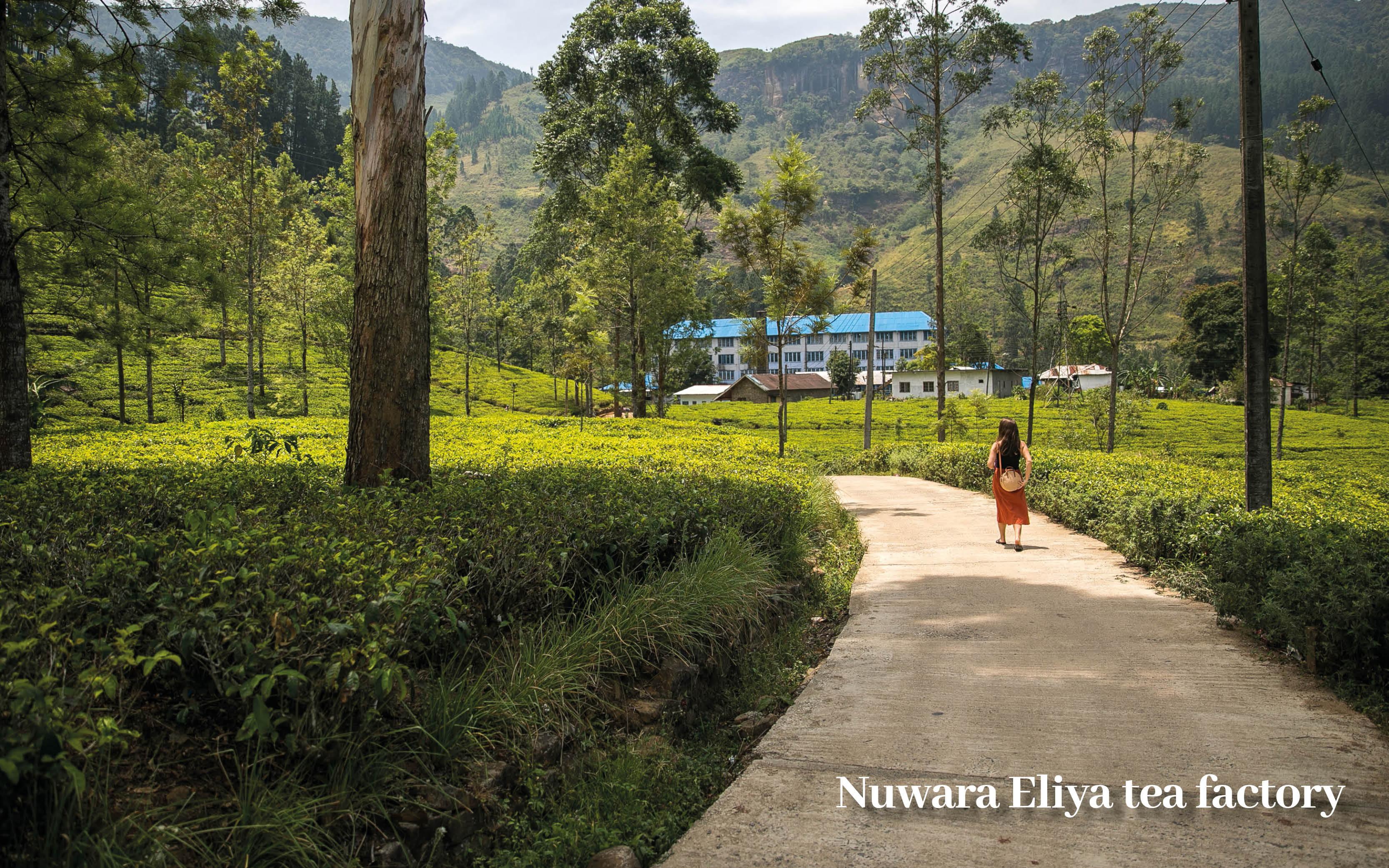 Classic Sri Lanka Holiday Offer blog images17