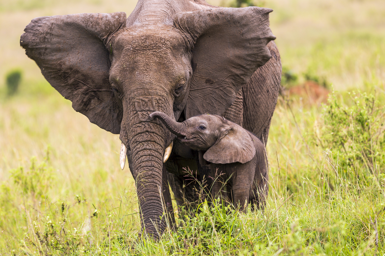 South Africa safari holiday