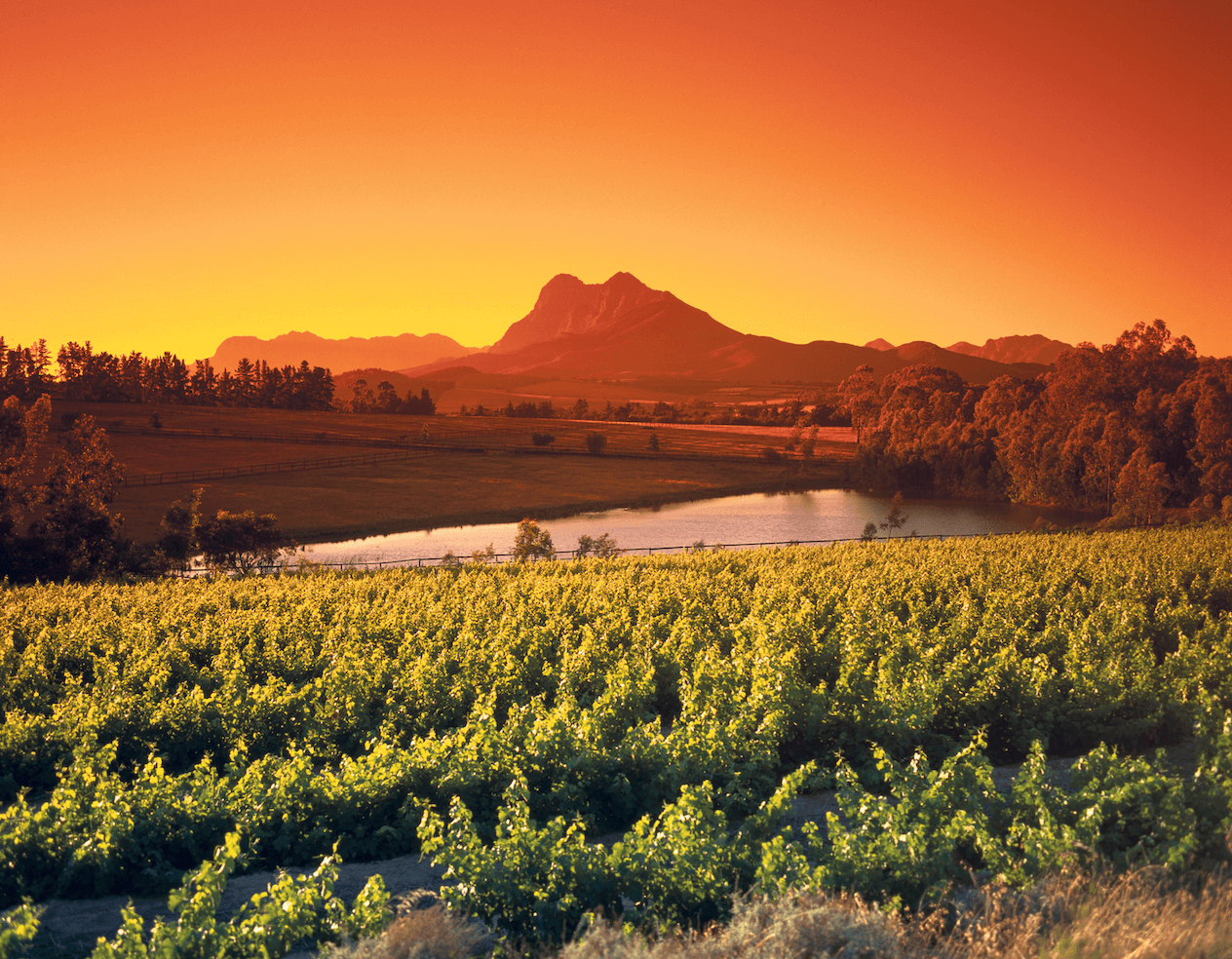 the wine lands